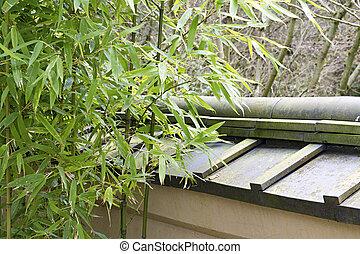 Bamboo Plants in Japanese Garden