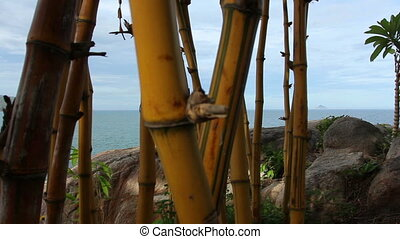 Bamboo, Sea and Mountains.