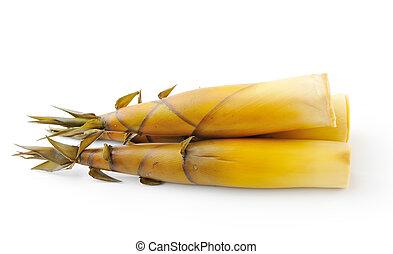 Bamboo shoot isolated on white background