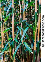 bamboo shoots japanese forest in macro closeup natural nature background