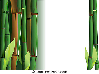 Bamboo Shoots On White Background. Vector Illustration.