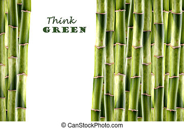 Bamboo shoots forming a green background