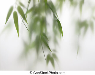 Bamboo Spa in Horizontal