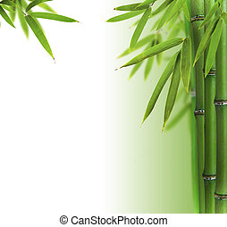 Bamboo sprouts with free space for text