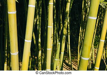 bamboo, stok, grøn plantage