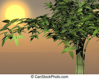 Bamboo tree in a sunset