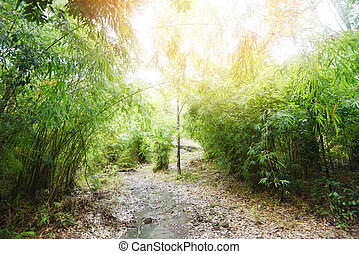 bamboo tree in the bamboo forest - Asian tropical forest