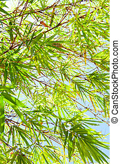 Bamboo tree, leaves on sunny blue sky background. Copy space.