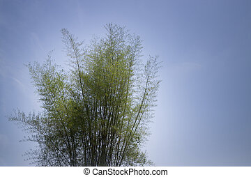 Bamboo Tree On Blue Sky