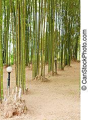 bamboo tree plant