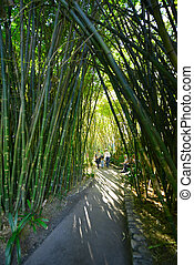 bamboo tree tunnel