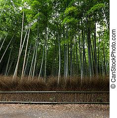 Bamboo trees and walkway