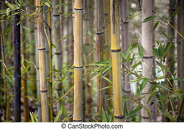 Close up of stems of bamboo trees