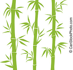Bamboo  - Green vector Bamboo on the white background