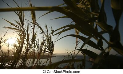 Bamboo - video footage of bamboo plants