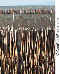 Bamboo wall - Field of bamboo tube in mangrove educational...