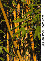 Bamboo with Green Leaves