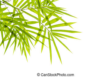 bamboo with isolated white background