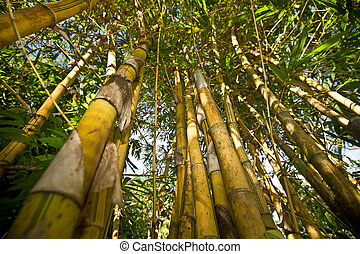 Bamboo with leaf against sky.