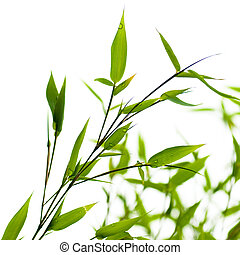 bamboos over a white background