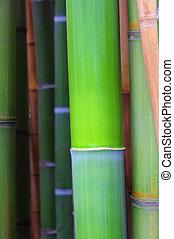 bambou, 38
