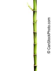 bambou, crosse