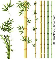 bambou, ensemble, plante