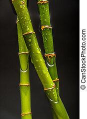 bambou, gouttes