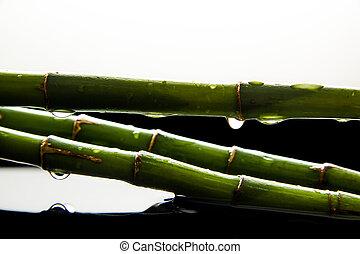 bambou, gouttes, vert