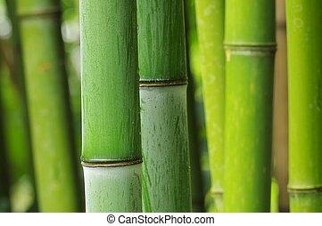 bambou