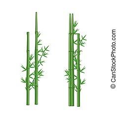bambou, vecteur, vert