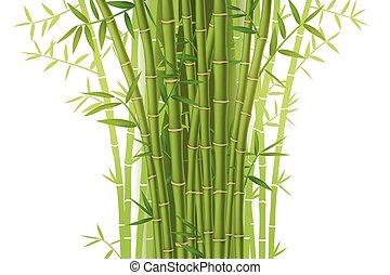bambou, vert, buisson