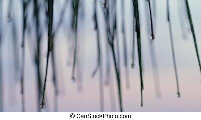 bambous, prise vue large, mini