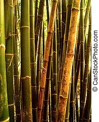 bambu, bakgrund