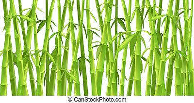 bambu, chinês, árvores
