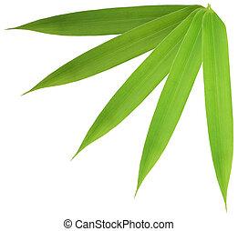 bambu, folha