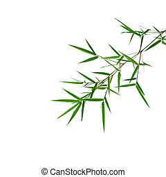 bambu, folhas