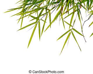 bambu, folhas, fundo, clouds.