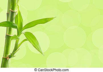 bambu, fundo