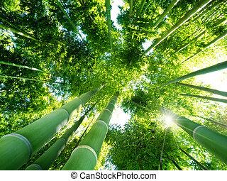 bambu skog