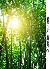 bambu skog, synhåll