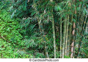 bambus bäume