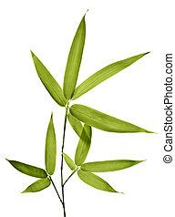 bambus, białe tło, odizolowany