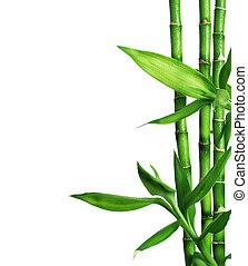 bambus, biały, odizolowany