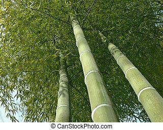 bambus, blick, bäume, auf