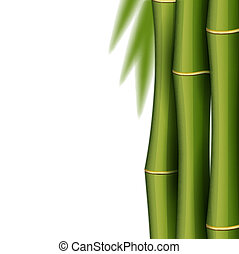 bambus, design, šablona