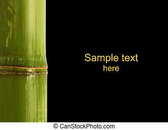 bambus, detail, hintergrund
