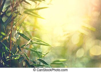 bambus, forest., wachsen, bambus, in, japanischer garten