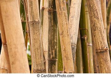 bambus hintergrund bambus abbildung design gegen. Black Bedroom Furniture Sets. Home Design Ideas