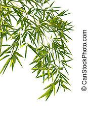 bambus, liście